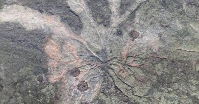 Floresta mais antiga do mundo é descoberta nos Estados Unidos