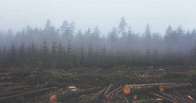 Medida do governo pode gerar mais desmatamento na Amazônia