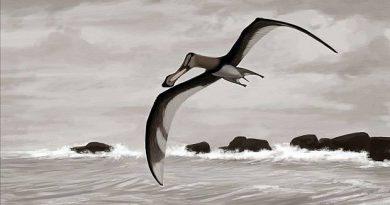 Pterossauros viveram na Península Antártica, mostra estudo de brasileiros