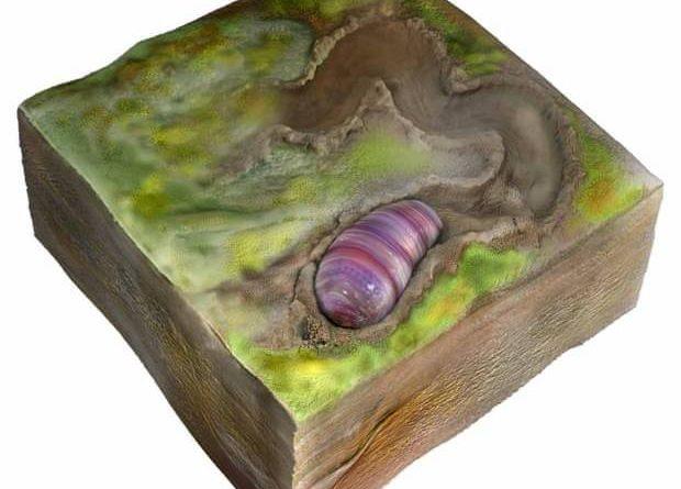 Conheça o verme que pode ser o ancestral dos humanos