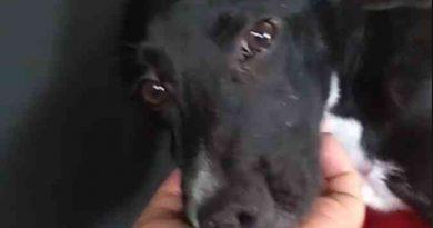 Mais de 50 cães morrem com suspeita de envenenamento em Belo Horizonte