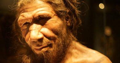 Neandertais tiveram hábitos alimentares semelhantes aos do Homo sapiens