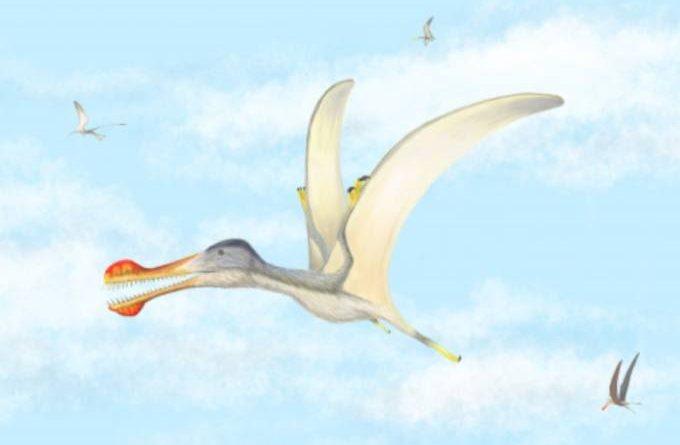 Três novas espécies de dinossauro voador são encontradas na África