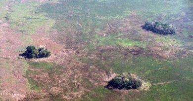Amazônia: humanos já exploram a região há mais de 10 mil anos