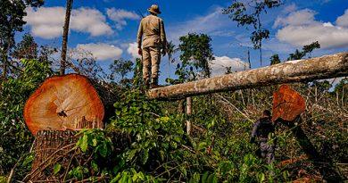 Quem são os desmatadores da Amazônia?