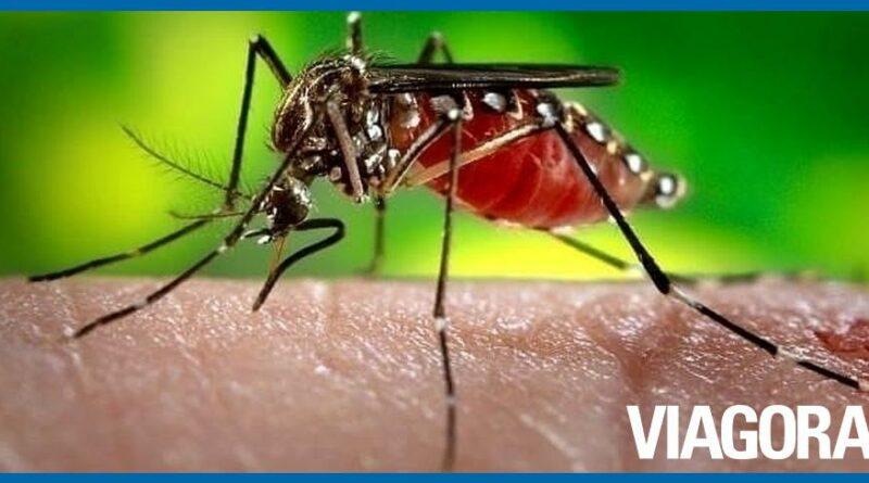 Piauí tem redução de 73% dos casos de dengue em relação a 2019