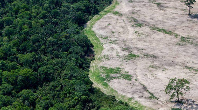 Amazônia tem 2º pior agosto de desmate, só perdendo para o do 1º ano Bolsonaro