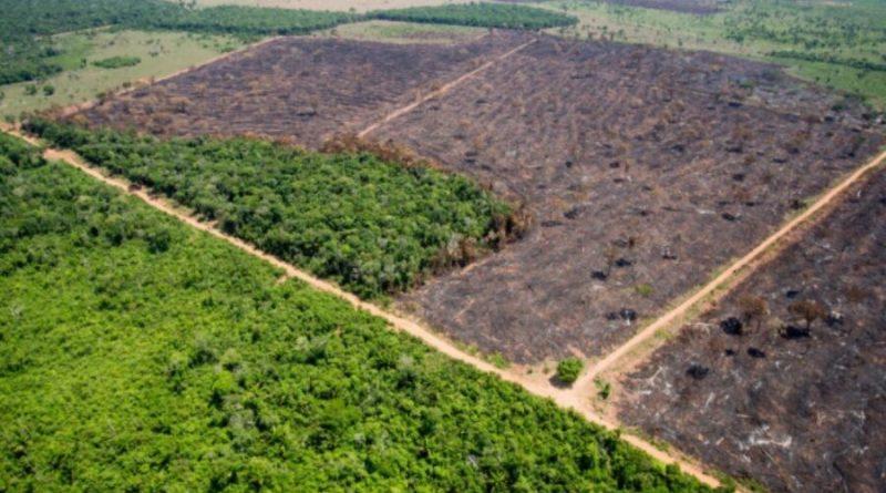 ONGs e agronegócio fazem aliança inédita para enviar a Bolsonaro medidas contra o desmatamento